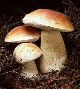 Антираковое действие грибов