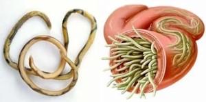 Круглые черви в китайской медицине
